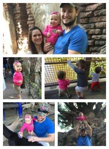 Animal kingdom_collage