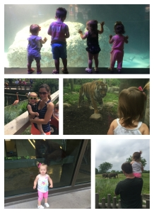zoo_collage