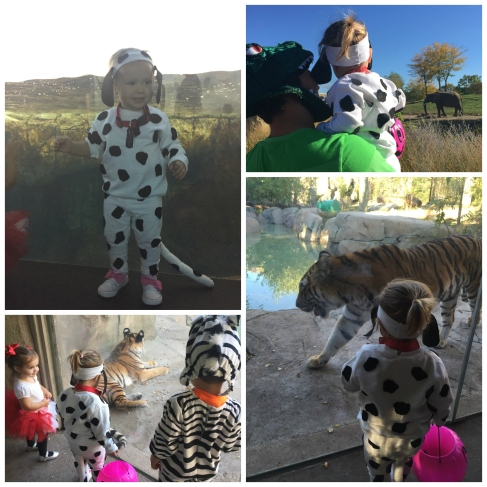 zooboo_collage_animals
