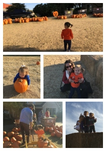 pumpkinpatch_collage