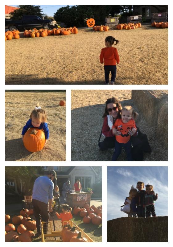 pumpkinpatch_collage