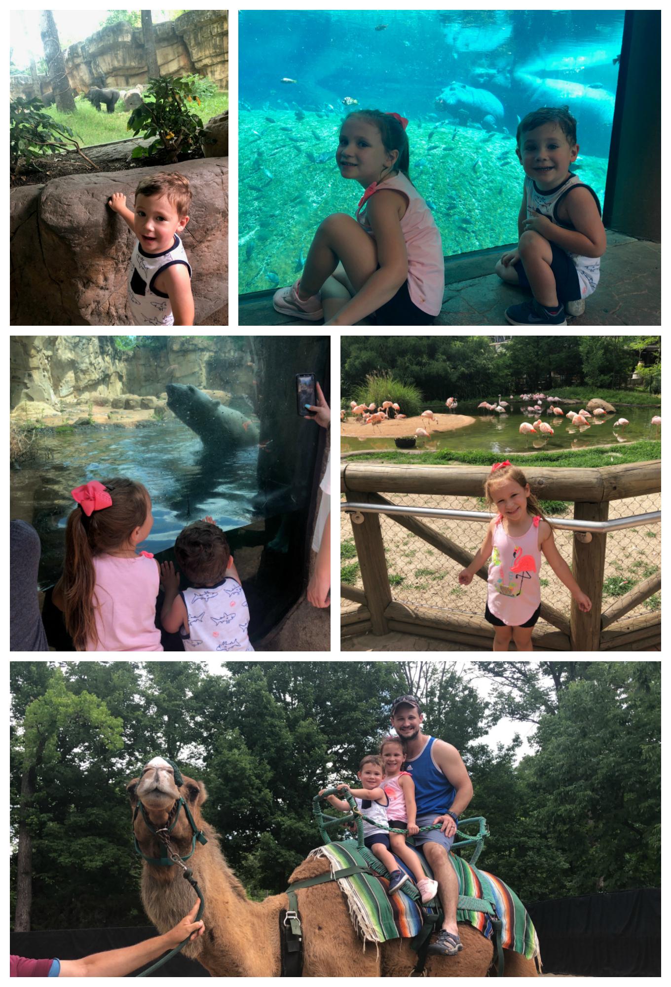 Memphis-Zoo3