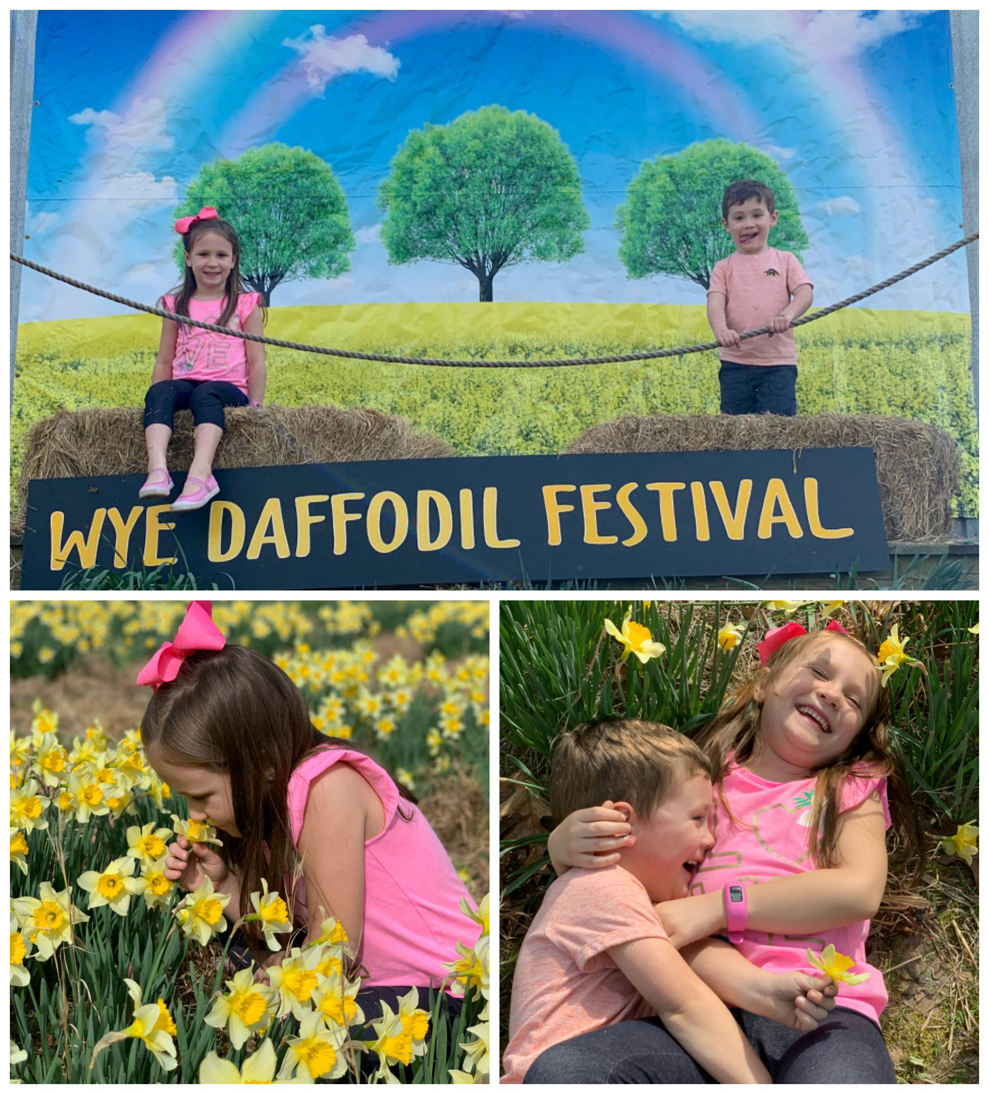 Daffodilhill-1