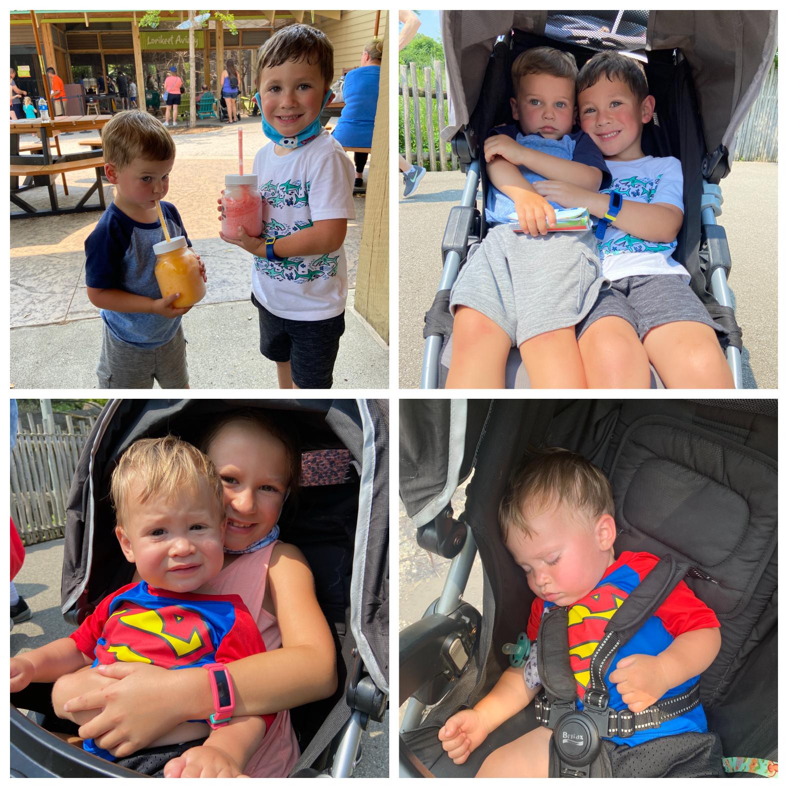 Trip-kids-zoo4